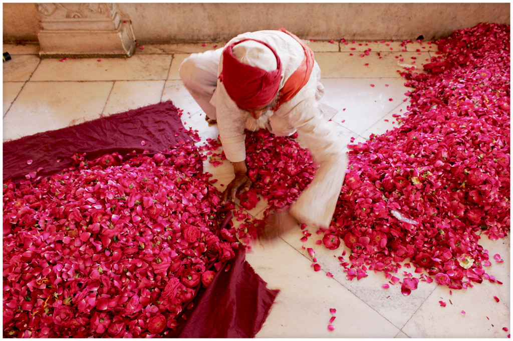 Collecting flower petals