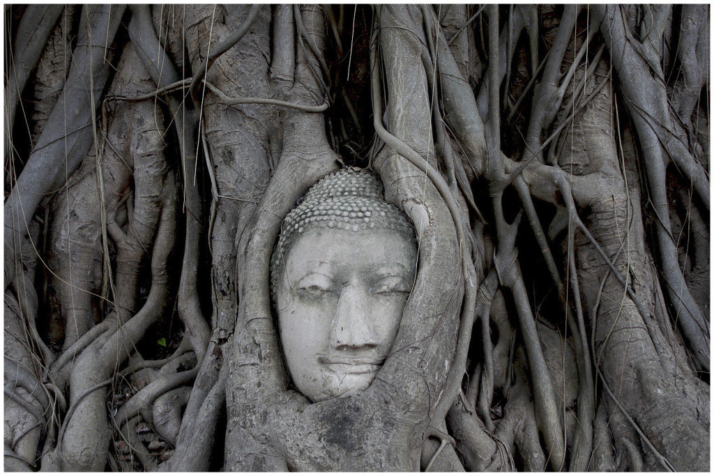 Ayutthaya Buddha in tree