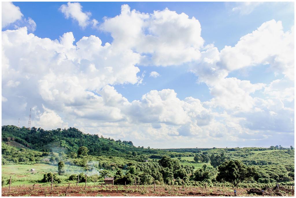 Banlung fields
